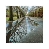 Park Reflections Gicléetryck av Harold Davis