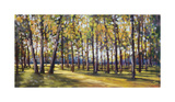 Forest Shade Giclee Print by Amanda Houston
