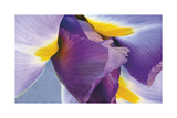 Iris Listening Giclee Print by Harold Davis