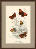 Butterflies Framed Giclee Print by  English School