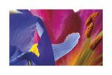Iris Touching Giclee Print by Harold Davis