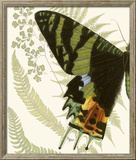 Butterfly Symmetry I Framed Giclee Print