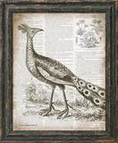 Vintage Bird I Posters by Babbitt Gwendolyn