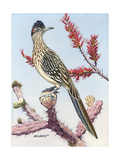 Stamp Art - Roadrunner Giclee Print by Albert Gilbert