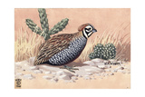 Stamp Art - Mearns Quail Giclee Print by Walter Weber
