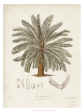 Antique Tropical Palm I Giclee Print by Elizabeth Twining