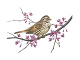 Stamp Art - Song Sparrow Giclee Print by Walter Weber