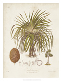 Antique Tropical Palm II Giclee Print by Elizabeth Twining