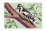 Stamp Art - Yellow Bellied Sapsucker Giclee Print by Walter Weber