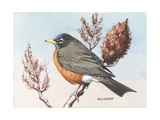 Stamp Art - Robin Giclee Print by Albert Gilbert