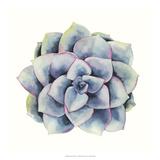 Tropical Plant V Prints by Grace Popp
