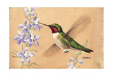 Stamp Art - Ruby Throated Hummingbird Giclee Print by Walter Weber
