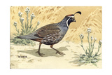 Stamp Art - Valley Quail Giclee Print by Walter Weber