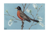Stamp Art - Western Robin Giclee Print by Walter Weber