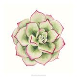 Tropical Plant IV Print by Grace Popp