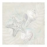 Weathered Shell Sketch I Giclée-Druck von June Erica Vess