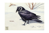 Stamp Art - Northern Raven Giclee Print by Walter Weber