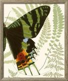 Butterfly Symmetry II Framed Giclee Print