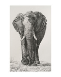 Wet and Dry Prints by Lindsay Scott