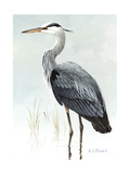 Stamp Art - Great Blue Heron Giclee Print by Anthony J. Rudisill