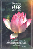 Meaning Of Life (Star Lotus) Print by  13