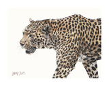 Passing Leopard Prints by Lindsay Scott