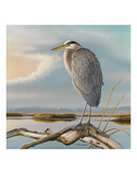 Marsh Watch - Great Blue Heron Prints by Richard Clifton