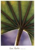 Ricepaper Plant-7 Print by June Hunter