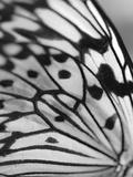 Flutter Giclee Print by Ella Lancaster