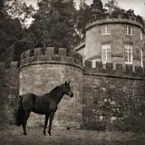 Bolesworth Horse Giclee Print by Pete Kelly