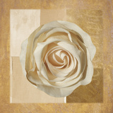 Warm Rose I Giclee Print by Lucy Meadows