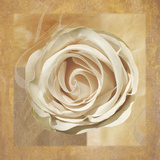 Warm Rose II Giclee Print by Lucy Meadows