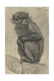 Monkey on a Branch, 1879 Giclee Print by August Allebe