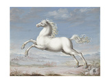 White Horse, 1560-99 Giclee Print by Joris Hoefnagel
