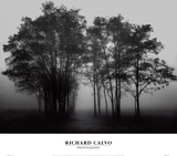 Gathered Trees Prints by Richard Calvo