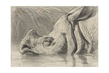 Head of a Rhinoceros, Half in the Water, C. 1860-1900 Giclee Print by August Allebe