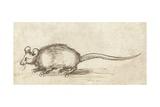Mouse, C. 1480-1520 Reproduction procédé giclée par Albrecht Durer