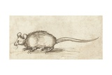 Mouse, C. 1480-1520 Giclee Print by Albrecht Durer