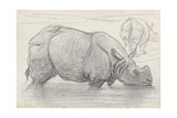 Rhinoceros in Water, C. 1860-1900 Giclee Print by August Allebe