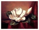 Magnolia Vignette l Posters by Fran Di Giacomo