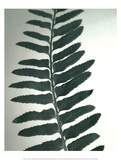 Fern Detail I Prints by Boyce Watt
