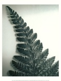 Fern Leaf I Posters by Boyce Watt