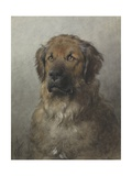 Head of a Newfoundland Dog, C. 1860-1920 Giclee Print by Otto Eerelman