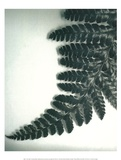 Fern Leaf II Prints by Boyce Watt