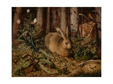 A Hare in the Fores, C. 1585 Giclee Print by Hans Hoffmann