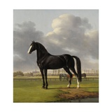 Adriaan Van Der Hoop'S Trotter 'De Vlugge' (The Fast One) in a Meadow, 1828 Giclee Print by Anthony Oberman