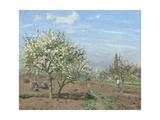 Orchard in Bloom, Louveciennes, 1872 Reproduction procédé giclée par Camille Pissarro