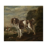 A Spaniel, 1653 Giclee Print by Paulus Potter
