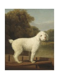 White Poodle in a Punt, 1780 Giclee Print by George Stubbs