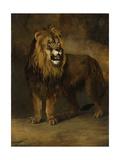 Lion from the Menagerie of King Louis Napoleon, 1808 Giclée-Druck von Pieter Gerardus van Os